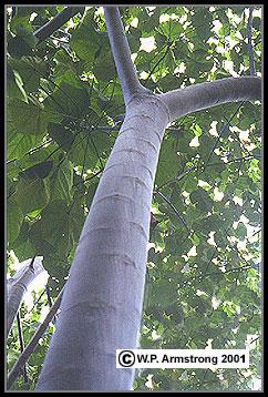 Species Amp Price List Future Forests Nursery Llc