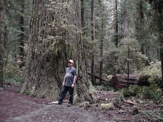 redwoods 2008 149